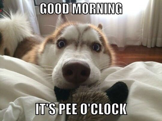 [Image: bed-dog-funny.jpg]